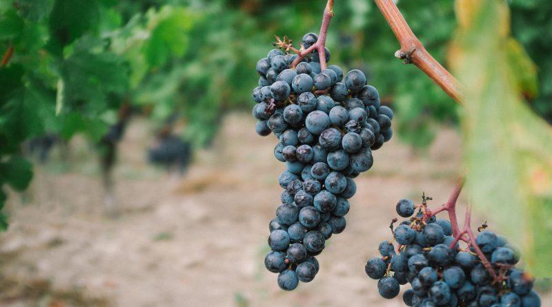 Quelles sont les meilleures recettes de fabrication de vin ?